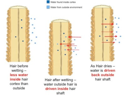 water-in-hair-diagram-final-600x457
